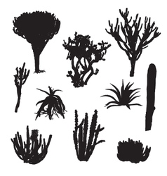 black silhouettes cacti and aloe vector image