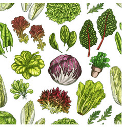 salad leaves and herbs seamless pattern background vector image