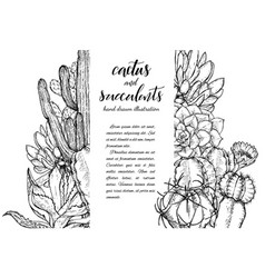 sketch linear cactus ans succulents vector image