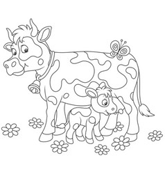 spotted cow feeding her little calf vector image
