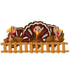 Three turkeys behind the fence vector