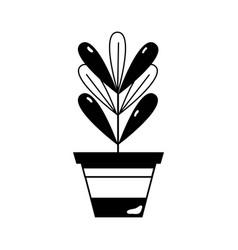 Contour plant with leaves inside flowerpot design vector