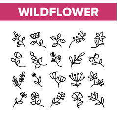 Wildflower natural collection icons set vector
