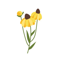 yellow gerbera with green stable and foliage icon vector image