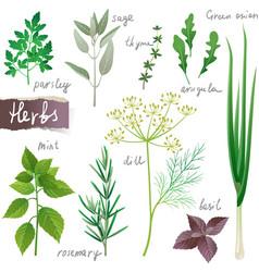 Herbs set vector