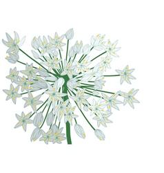 Allium on white vector