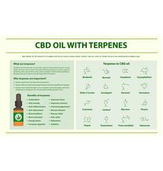 Cbd oil with terpenes horizontal infographic vector