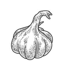 garlic vegetable plant sketch vector image