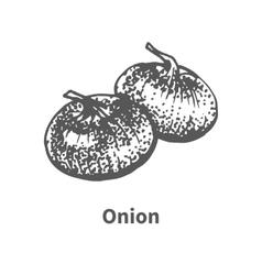Hand-drawn onion vector
