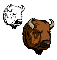 Head bison buffalo or wild ox bull animal vector