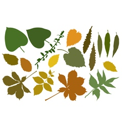 color silhouettes of leafs vector image vector image