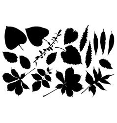 black silhouette of leafs vector image vector image