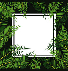 palms tree frame vector image vector image