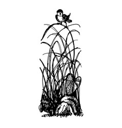 bird on clump of grass doodle vector image
