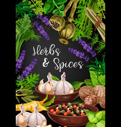 herbs spices and food seasonings vector image