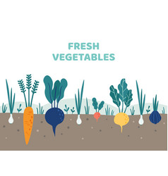 vegetable garden gardening vegetables food vector image