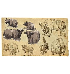 Animals theme BOVIDAE cows bisons yak buffalo pac vector image