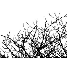 branch tree silhouette on white background vector image