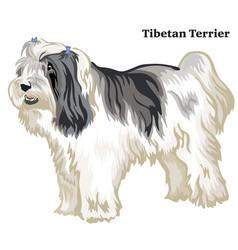 Colored decorative standing portrait of tibetan vector