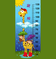 giraffe height measure vector image vector image