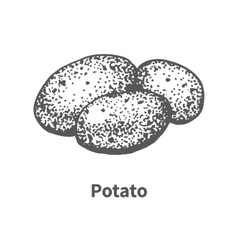 hand-drawn potato vector image