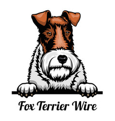 Head fox terrier wire - dog breed color image of vector
