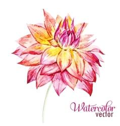 Watercolor dahlia flowers vector image