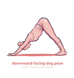 Yoga downward-facing dog adho mukha svanasana vector