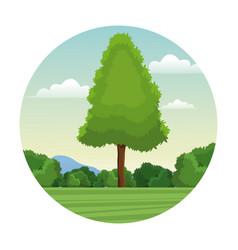 tree pine forest landscape stamp vector image vector image