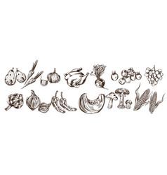 autumn veggies set collection line art artichoke vector image