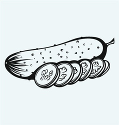 Cucumber and slices vector image