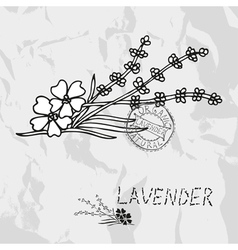 Hand drawn lavender vector image