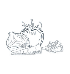 Tomato onion and carrot hand draw vector