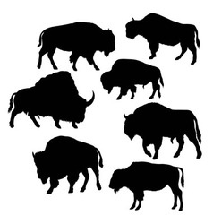 Wild Bull Silhouettes vector image