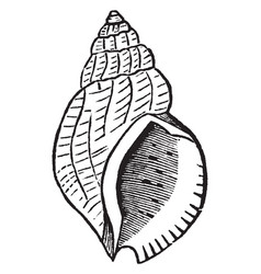 A species of snail vintage vector