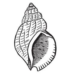 A species snail vintage vector