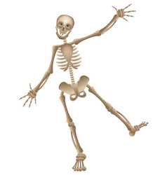 cartoon human skeleton dancing halloween vector image
