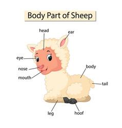 Diagram showing body part sheep vector