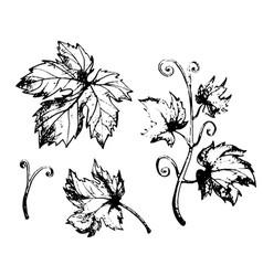 grape leaves set vector image