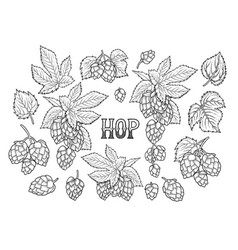 graphic hops collection vector image