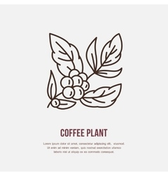 Line icon of coffee tree Coffee plant vector