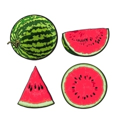 Whole half quarter and slice of ripe watermelon vector