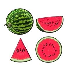Whole half quarter and slice ripe watermelon vector