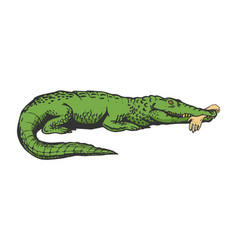 Alligator with hand color sketch engraving vector