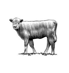Calf vector