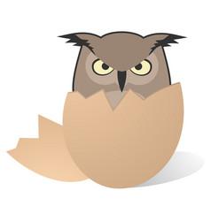 Owl birth vector