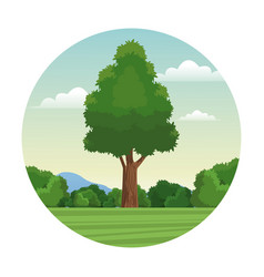 Tree wood forest landscape stamp vector