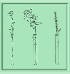 hand drawn lavender plants flowers in vitro vial vector image