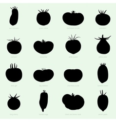 Different sorts of tomatoes vector image