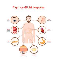 Fight-or-flight response vector